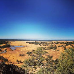 This was from a hike in Upper Bidwell Park, Chico, CA